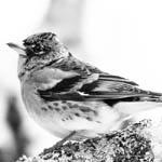 partridge-v-crittenden